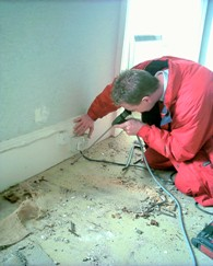 Testing for woodworm with a borescope